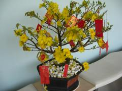 The Hoa Mai tree (Ochra Flower) for Tet at the hotel where they stayed.
