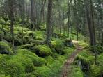 Great Smoky Mountain National Park. Courtesy of adventureclubsa.com.