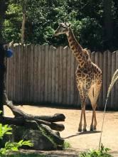 Giraff1