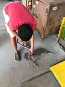 cat at Crab Shack