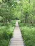 Walkway to the Tarn